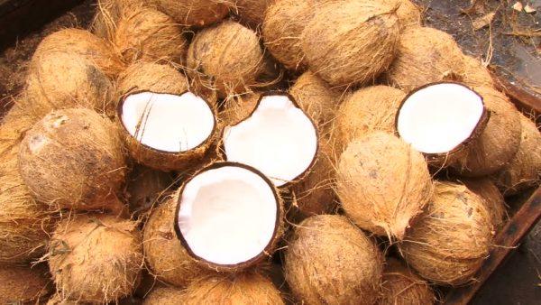 Coconuts Market